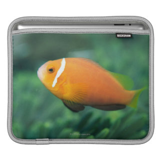 Close up of Maldives anemone fish, Maldives 2 iPad Sleeve