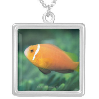 Close up of Maldives anemone fish, Maldives 2 Silver Plated Necklace
