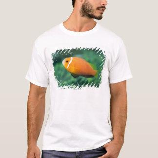 Close up of Maldives anemone fish, Maldives 2 T-Shirt