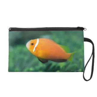 Close up of Maldives anemone fish, Maldives 2 Wristlet Purse