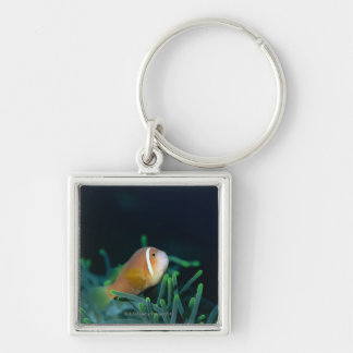 Close up of Maldives anemone fish, Maldives Silver-Colored Square Key Ring