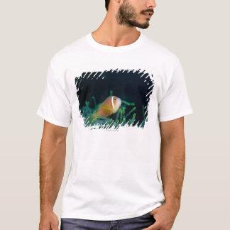 Close up of Maldives anemone fish, Maldives T-Shirt
