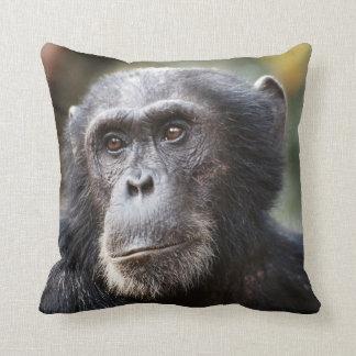 Close-up of male Chimpanzee Cushion