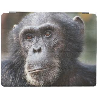 Close-up of male Chimpanzee iPad Cover