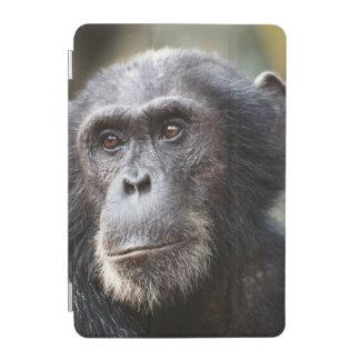 Close-up of male Chimpanzee iPad Mini Cover