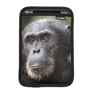 Close-up of male Chimpanzee iPad Mini Sleeve