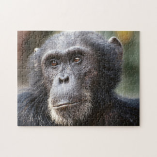 Close-up of male Chimpanzee Jigsaw Puzzle