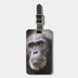 Close-up of male Chimpanzee Luggage Tag