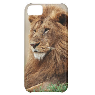 Close-up of male Lion iPhone 5C Case