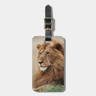 Close-up of male Lion Luggage Tag