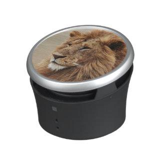 Close-up of male Lion Speaker