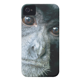 Close-up of monkey Case-Mate iPhone 4 cases