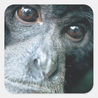 Close-up of monkey square sticker