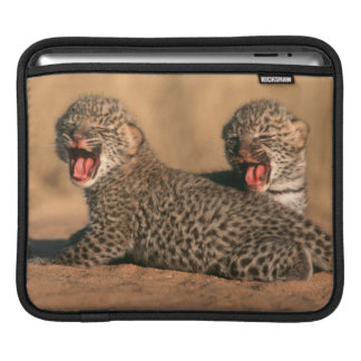 Close-Up Of New Born Leopard (Panthera Pardus) iPad Sleeve