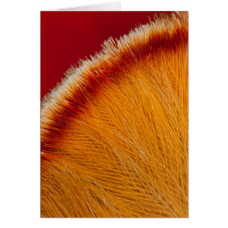Close Up Of Orange Feather Card