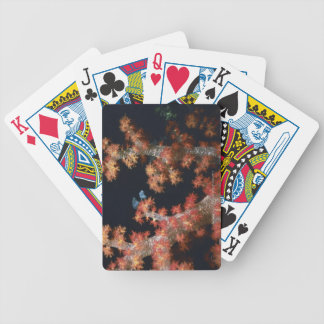 Close-up of Orange Soft Coral underwater, Palau Bicycle Playing Cards
