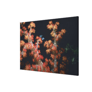 Close-up of Orange Soft Coral underwater, Palau Canvas Print