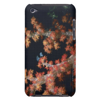 Close-up of Orange Soft Coral underwater, Palau iPod Touch Covers