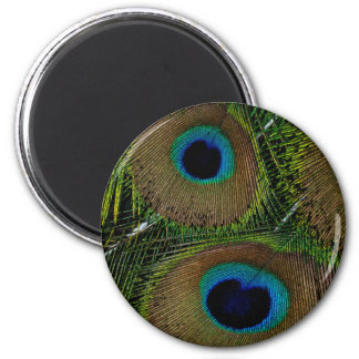 Close-up of peacock feathers 6 cm round magnet