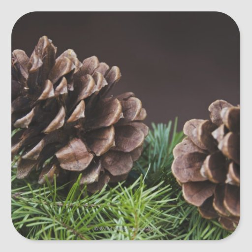 Close-up of pine cone square stickers