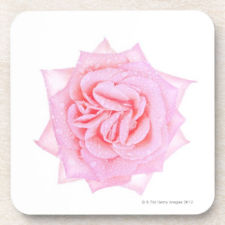 Close up of pink rose flower head coaster