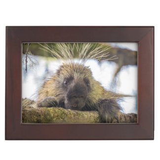 Close-up of porcupine in a tree keepsake box