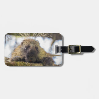 Close-up of porcupine in a tree luggage tag