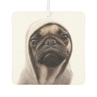Close up of pug wearing hoodie. car air freshener