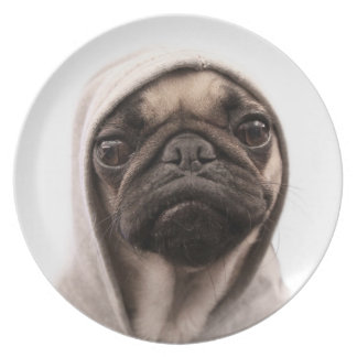 Close up of pug wearing hoodie. party plate