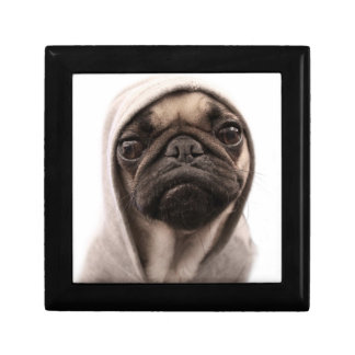 Close up of pug wearing hoodie. small square gift box