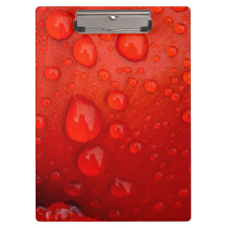 Close-up of raindrops on tulip petal clipboards
