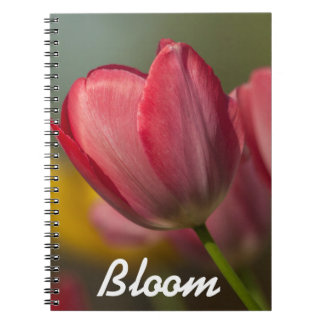 Close-up of red and yellow tulips in garden notebook