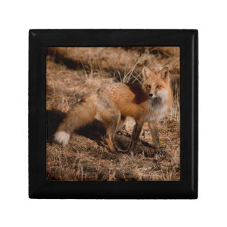 Close-up of red fox gift box