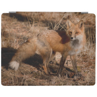Close-up of red fox iPad cover