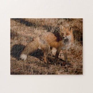 Close-up of red fox jigsaw puzzle