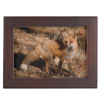 Close-up of red fox keepsake box