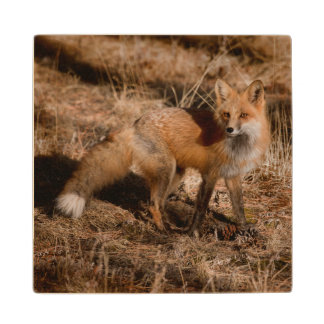 Close-up of red fox maple wood coaster