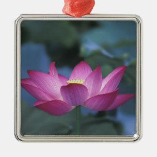 Close-up of red lotus flower and green leaves, christmas ornament