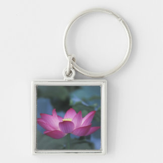 Close-up of red lotus flower and green leaves, key ring