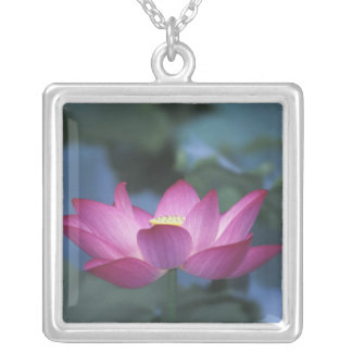 Close-up of red lotus flower and green leaves, silver plated necklace