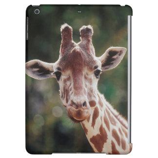 Close up of Reticulated Giraffe