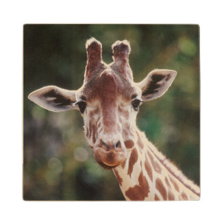 Close up of Reticulated Giraffe Wood Coaster