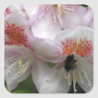 Close up of Rhododendron with Bee Square Sticker