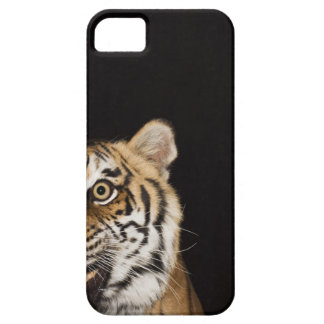 Close up of roaring tiger's face case for the iPhone 5