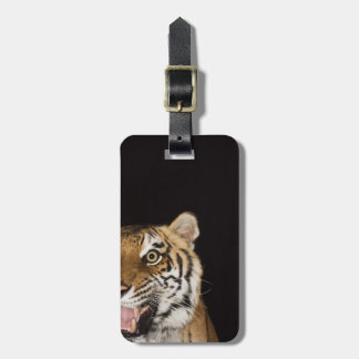 Close up of roaring tiger's face luggage tag