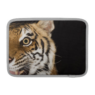 Close up of roaring tiger's face MacBook air sleeves