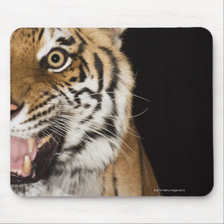Close up of roaring tiger's face mouse mat