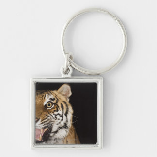 Close up of roaring tiger's face Silver-Colored square key ring