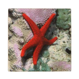 Close-Up of Sea star Maple Wood Coaster