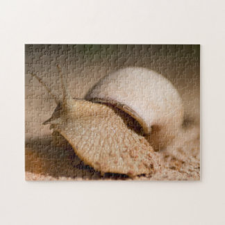 Close-Up Of Snail, USAngu Flats, Madibira Jigsaw Puzzle